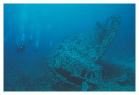 Tiefste Stelle Im Meer Lebewesen